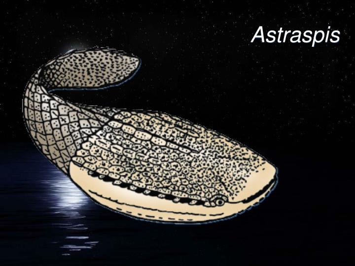 Astraspis