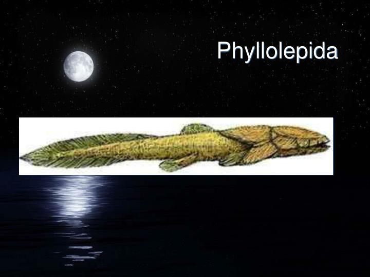 Phyllolepida