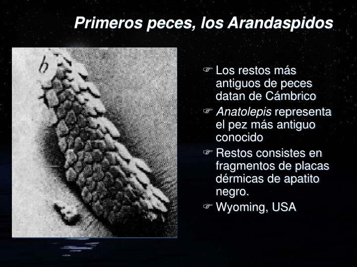 Primeros peces, los Arandaspidos