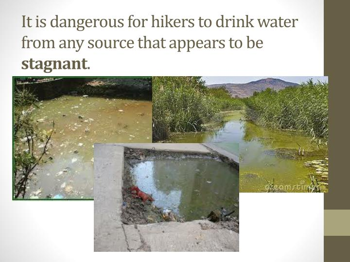 It is dangerous for hikers to drink water from any source that appears to be