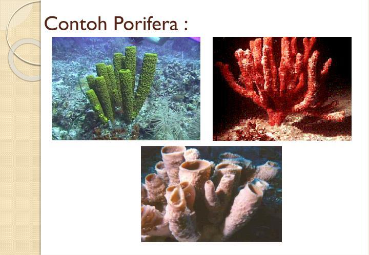 Ppt Animalia Powerpoint Presentation Id 7050148
