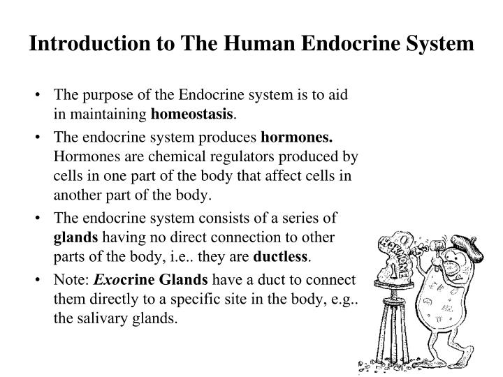 Ppt The Human Endocrine System Biology 12 E Mcintyre Powerpoint