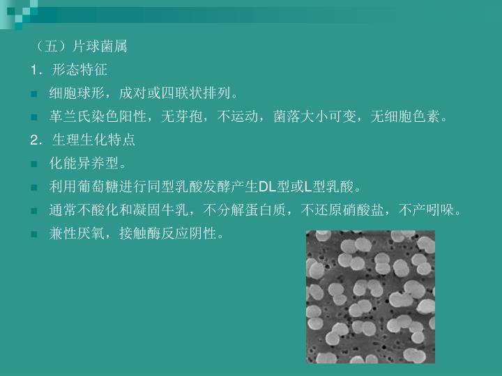(五)片球菌属