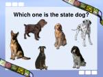 which one is the state dog