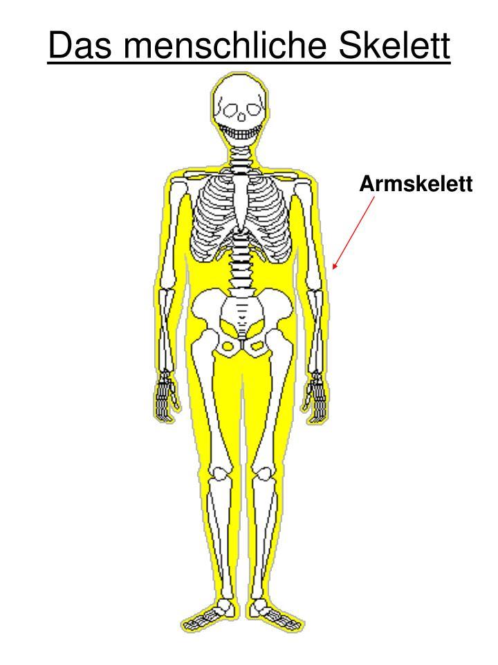 Großzügig Das Menschliche Skelett Gekennzeichnet Bilder - Anatomie ...