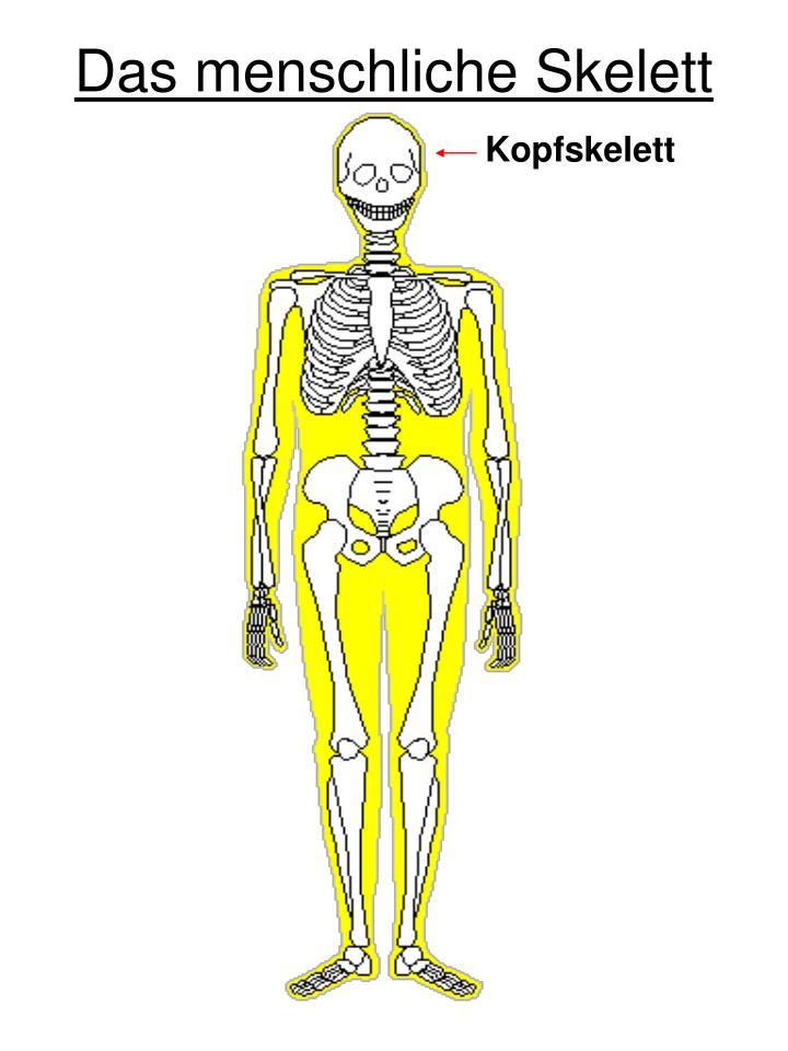 Großartig Anatomie Und Physiologie Skelettsystem Kennzeichnung Ideen ...