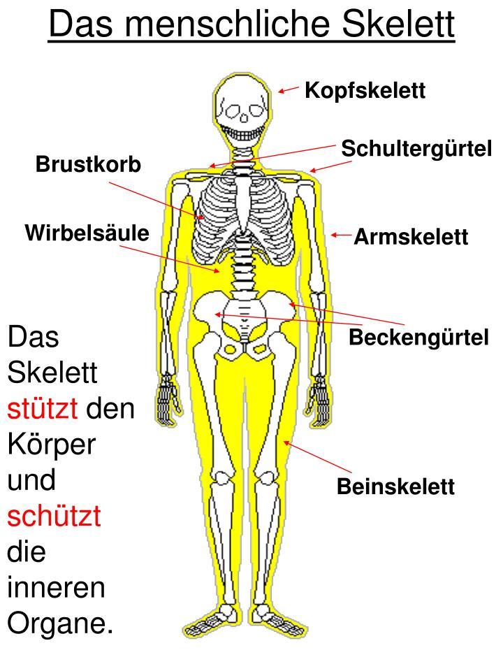 Ausgezeichnet Diagramm Menschlichen Körper Organe Gekennzeichnet ...
