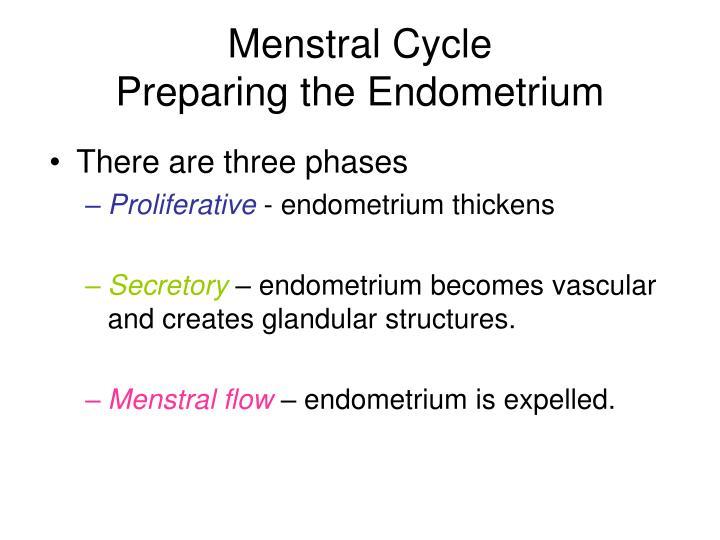 Menstral Cycle