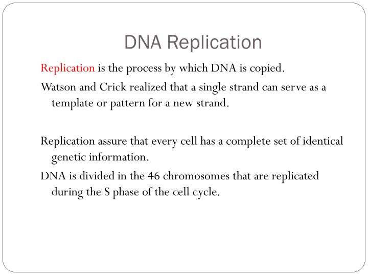 Ppt Dna Replication Powerpoint Presentation Free Download Id 7056440