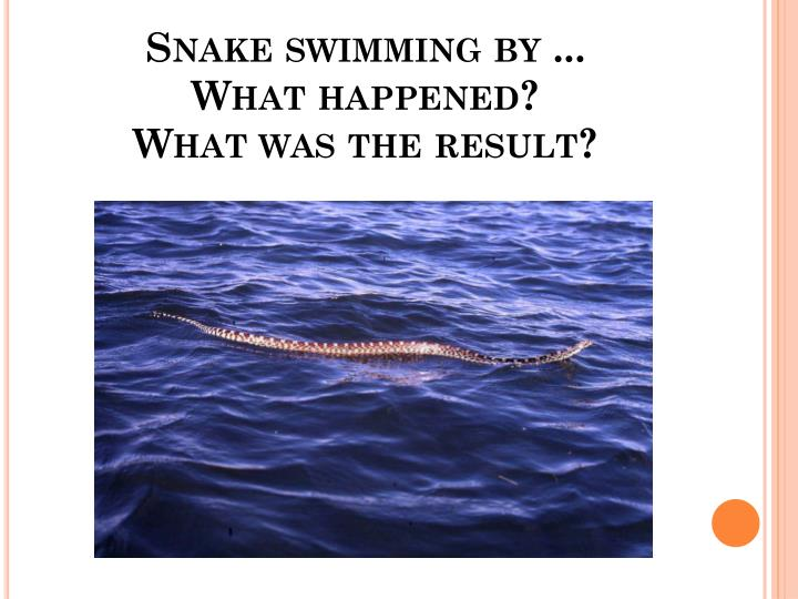 Snake swimming by ...