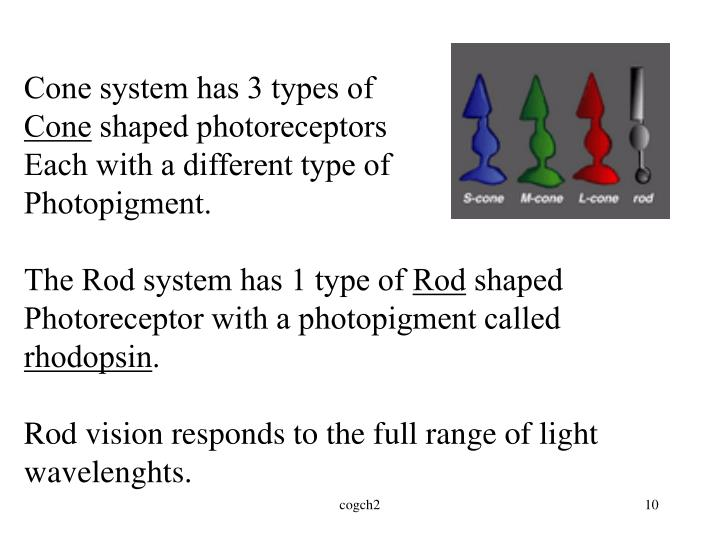 Cone system has 3 types of