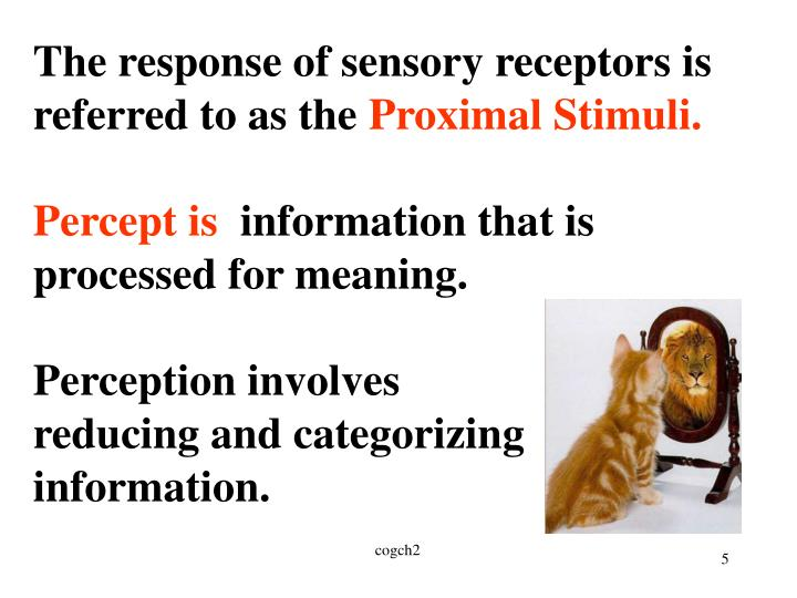 The response of sensory receptors is referred to as the