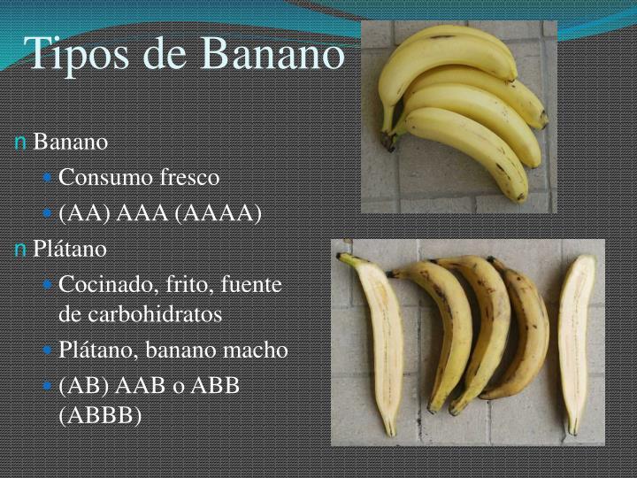 Tipos de Banano