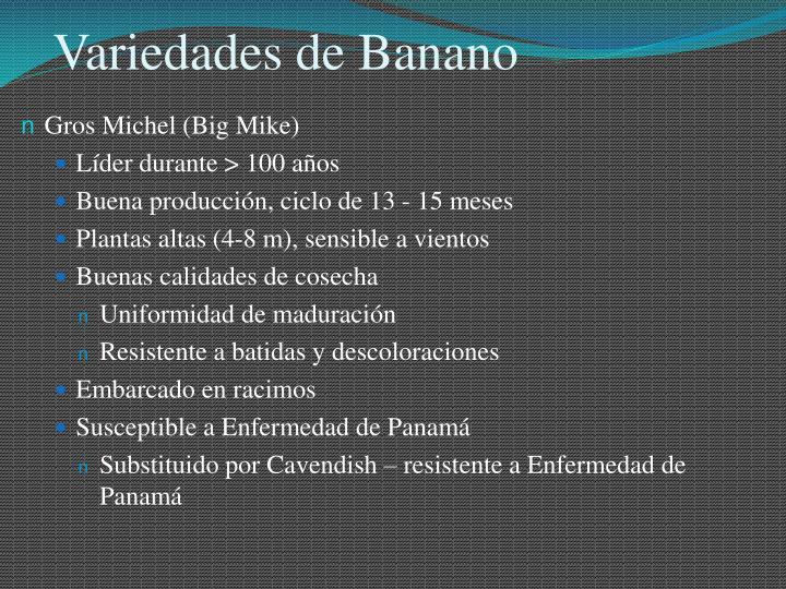 Variedades de Banano