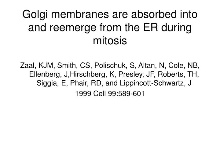 Golgi membranes are absorbed into and reemerge from the er during mitosis