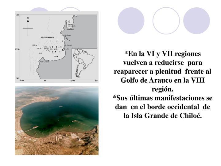 *En la VI y VII regiones vuelven a reducirse  para reaparecer a plenitud  frente al Golfo de Arauco en la VIII región.
