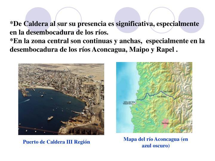 *De Caldera al sur su presencia es significativa, especialmente en la desembocadura de los ríos.