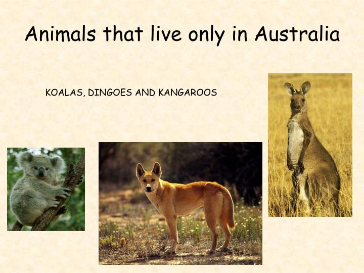 Animals that live only in Australia