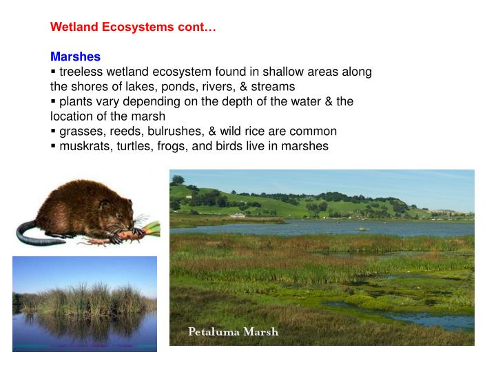 essays in wetland ecosystems Essay writing guide learn unique characteristics of intertidal wetlands and explain the impact of in the human orientated exploitation of these ecosystems.