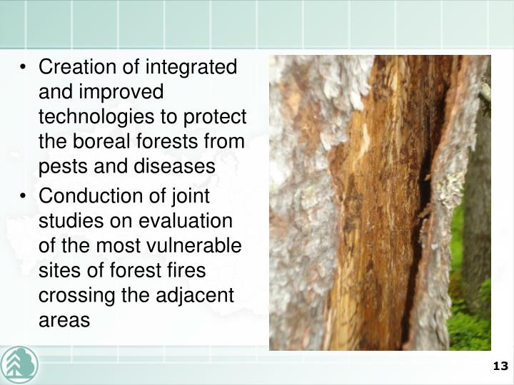 Creation of integrated and improved technologies to protect the boreal forests from pests and diseases