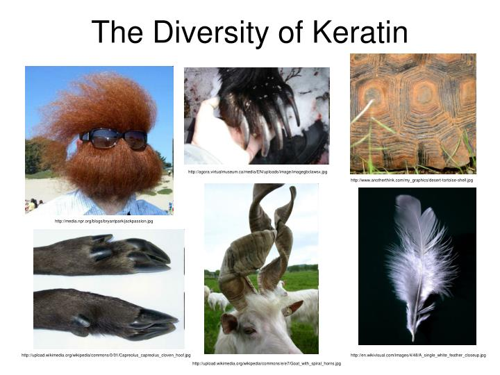 The Diversity of Keratin