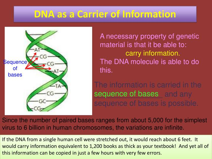 DNA as a Carrier of Information