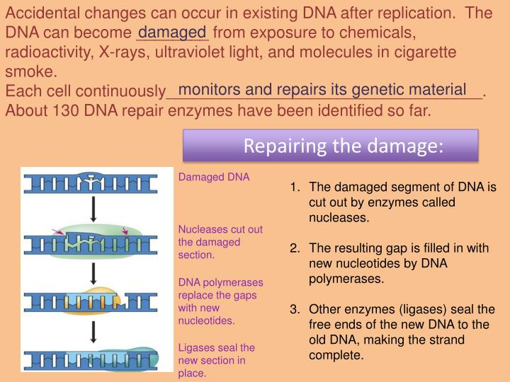 Accidental changes can occur in existing DNA after replication.  The DNA can become ________ from exposure to chemicals, radioactivity, X-rays, ultraviolet light, and molecules in cigarette smoke.