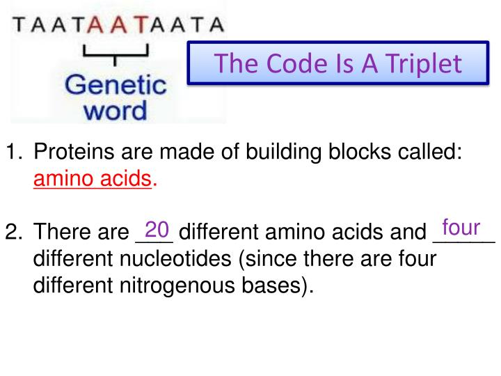 The Code Is A Triplet