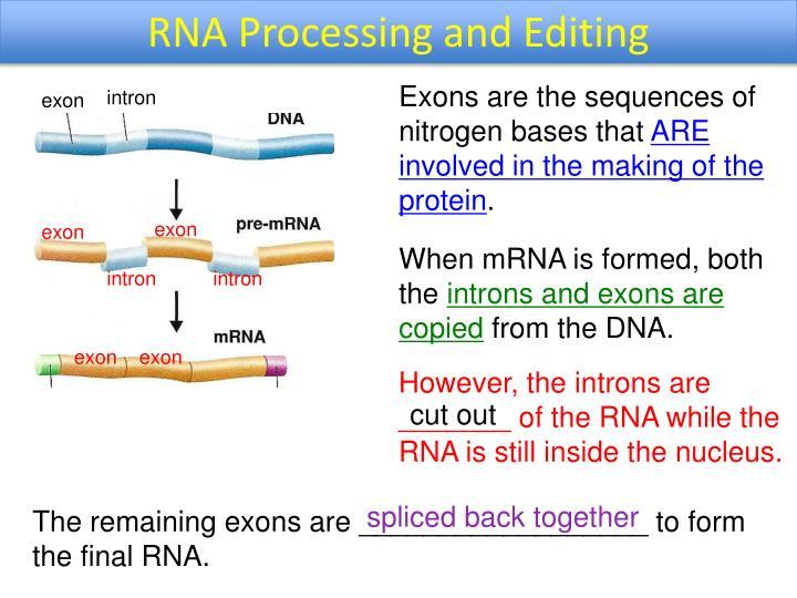RNA Processing and Editing