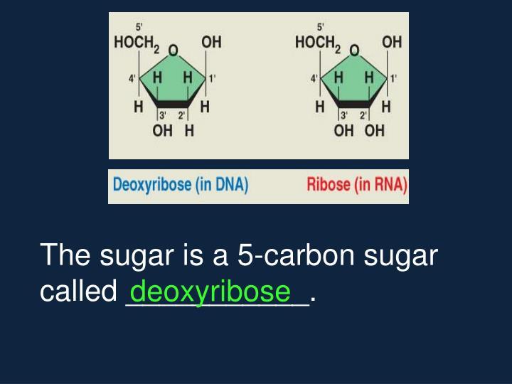 The sugar is a 5-carbon sugar called ___________.