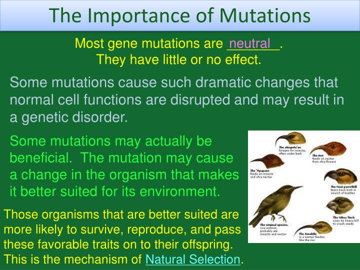 The Importance of Mutations