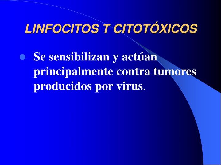 LINFOCITOS T CITOT