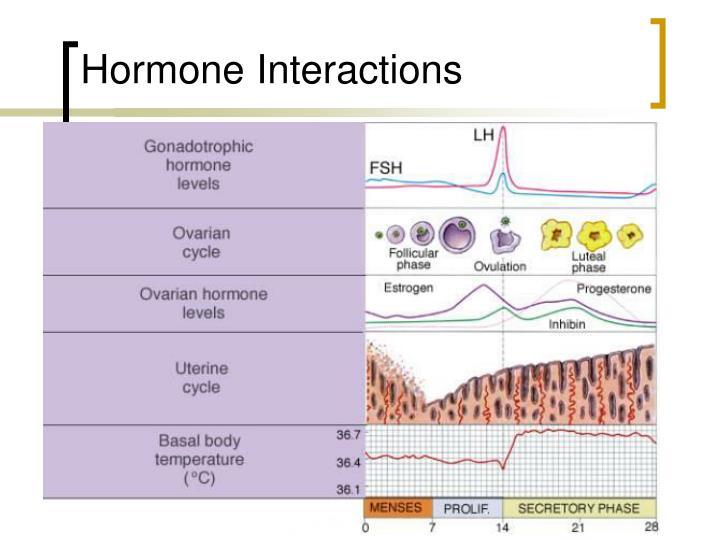 Hormone Interactions