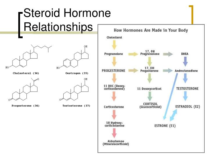 Steroid Hormone Relationships