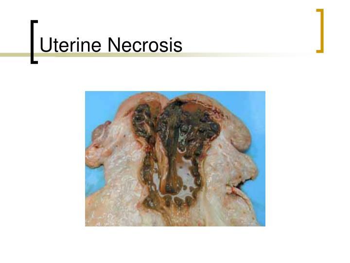 Uterine Necrosis