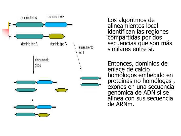 Los algoritmos de alineamientos local identifican las regiones compartidas por dos secuencias que son más similares entre sí.