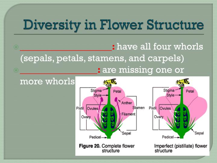 Diversity in Flower Structure