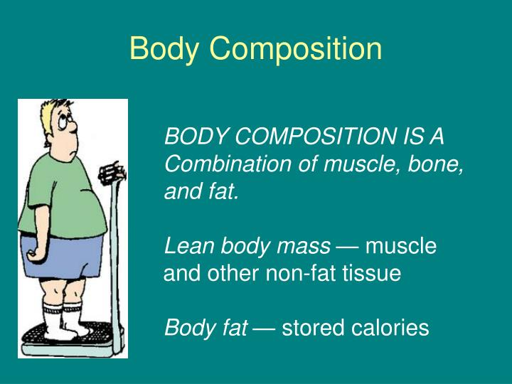 body composition n.