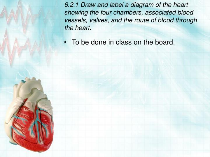 Ppt circulation and the heart powerpoint presentation id7075046 621 draw and label a diagram of the heart showing the four chambers associated blood vessels valves ccuart Gallery