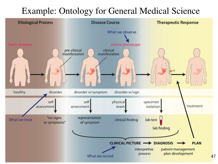 Example: Ontology for General Medical Science
