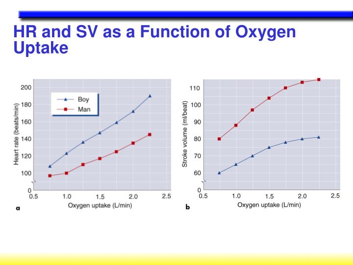 HR and SV as a Function of Oxygen Uptake