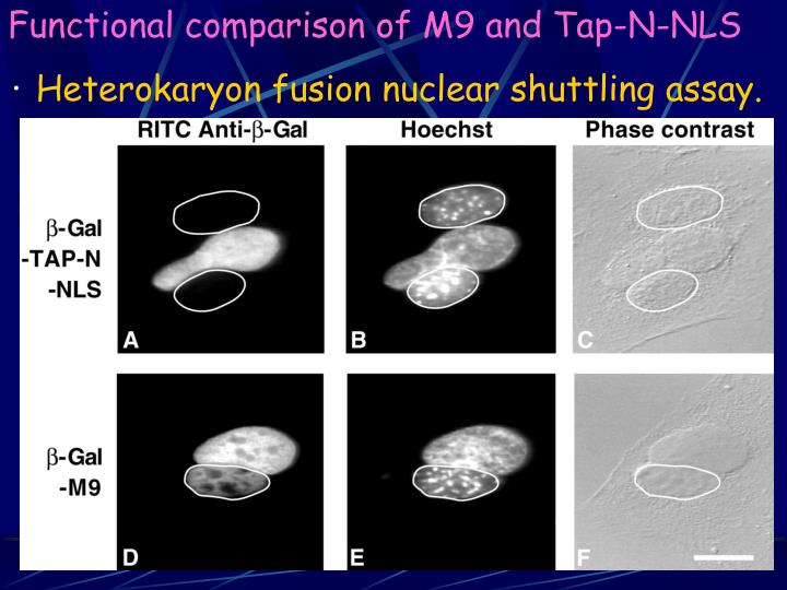 Functional comparison of M9 and Tap-N-NLS