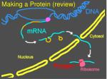 making a protein review