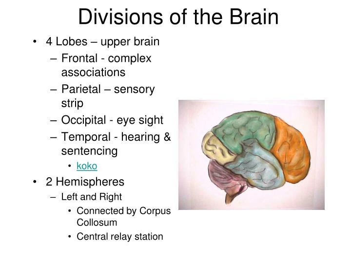 Brain sencery strip