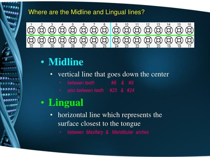 Where are the Midline and Lingual lines?