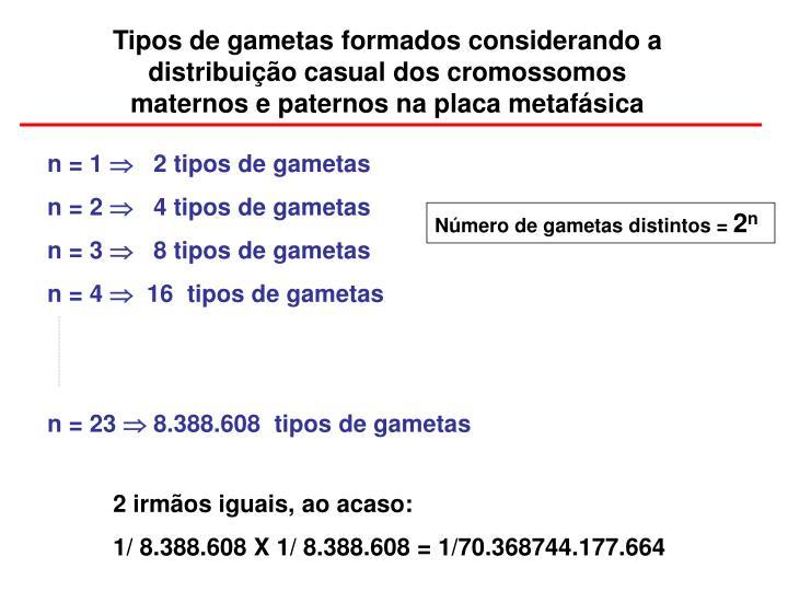 Tipos de gametas formados considerando a       distribuição casual dos cromossomos                     maternos e paternos na placa metafásica