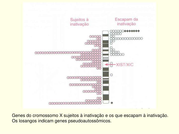 Genes do cromossomo X sujeitos à inativação e os que escapam à inativação.