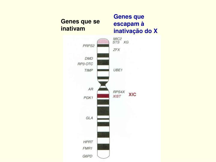 Genes que escapam à inativação do X