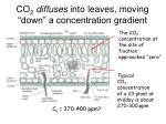 co 2 diffuses into leaves moving down a concentration gradient