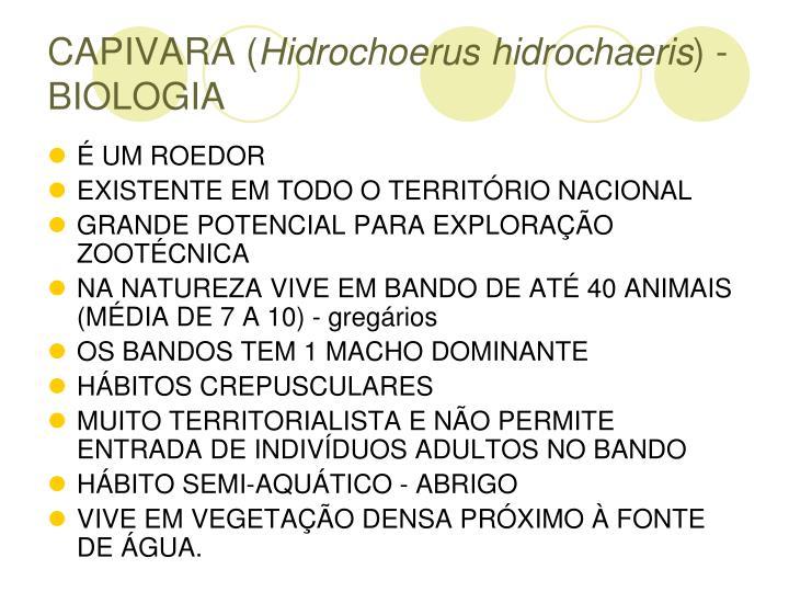 CAPIVARA (